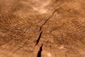 Заделка трещин в бревнах сруба